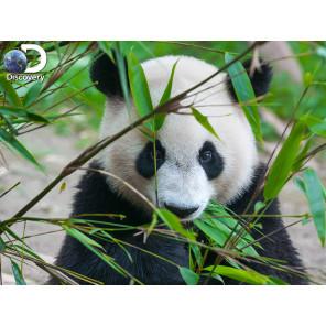 Большая панда Super 3D пазлы с эффектом трехмерного объемного изображения 10071
