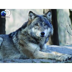 Волк Super 3D пазлы с эффектом трехмерного объемного изображения 10152