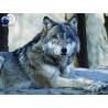 Волк Super 3D пазлы с эффектом трехмерного объемного изображения