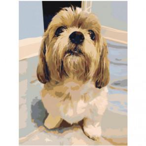 Милая собачка Раскраска картина по номерам на холсте