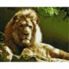 Взгляд льва Алмазная мозаика вышивка Painting Diamond