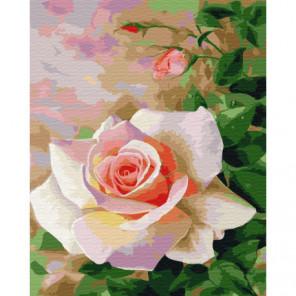 Белая роза Раскраска картина по номерам на холсте