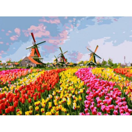 Разноцветное поле тюльпанов Раскраска картина по номерам на холсте