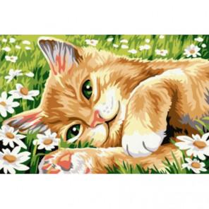 Рыжий котик в ромашках Раскраска картина по номерам на холсте