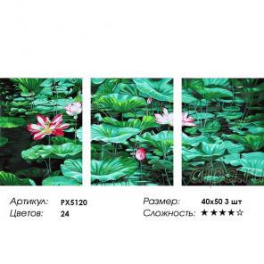 Сложность и количество цветов Кувшинки Триптих Раскраска картина по номерам на холсте PX5120