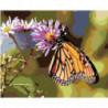 Бабочка на цветке 80х100 Раскраска картина по номерам на холсте