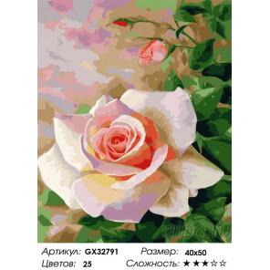 Сложность и количество цветов Свежая роза Раскраска картина по номерам на холсте GX32791