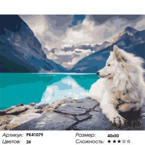 Сложность и количество цветов Путешествие собаки Раскраска картина по номерам на холсте PK41079