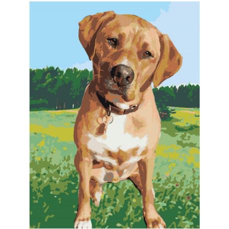 Собака на лугу Раскраска картина по номерам на холсте ...