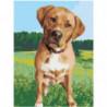 Собака на лугу Раскраска картина по номерам на холсте