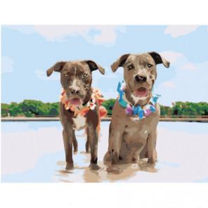 Две собаки на пляже Раскраска картина по номерам на холсте