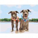 Две собаки на пляже 60х80 Раскраска картина по номерам на холсте