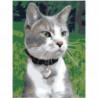 Котик с ошейником Раскраска картина по номерам на холсте