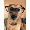 Собака в очках Раскраска картина по номерам на холсте