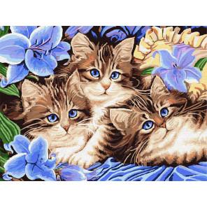 Котята в цветах Раскраска картина по номерам на холсте Z-EX5689