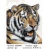 Тигриная жажда Раскраска картина по номерам на холсте