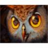 Хищный взгляд совы Раскраска картина по номерам на холсте