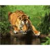 Тигр у водопоя Раскраска картина по номерам на холсте