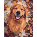 Улыбчивый пес Раскраска картина по номерам на холсте