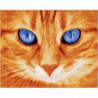 Голубоглазый рыжий кот Раскраска картина по номерам на холсте