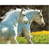 Пара белых лошадей Раскраска картина по номерам на холсте
