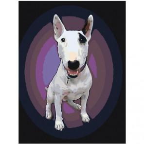 Бультерьер на фиолетовом фоне 60х80 Раскраска картина по номерам на холсте