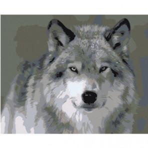 Северный волк 80х100 Раскраска картина по номерам на холсте