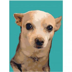Собака на бирюзовом фоне 60х80 Раскраска картина по номерам на холсте
