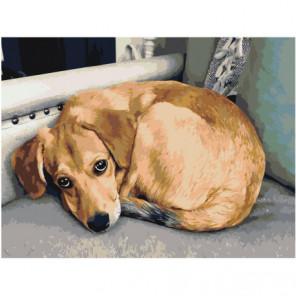 Коричневая собака 75х100 Раскраска картина по номерам на холсте