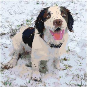 Собака породы бернский зенненхунд 100х100 Раскраска картина по номерам на холсте