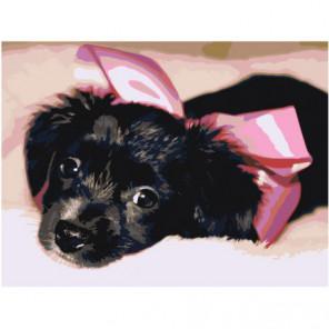 Черный щенок подарок 75х100 Раскраска картина по номерам на холсте