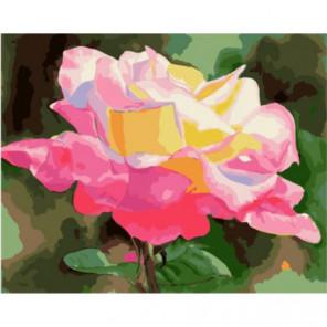 Бутон розы под солнцем Раскраска картина по номерам на холсте