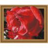 Прохлада для розы Алмазная мозаика вышивка Painting Diamond