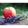 Сочное яблоко Раскраска картина по номерам на холсте