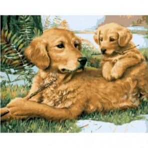 Собачьи игры Раскраска картина по номерам на холсте