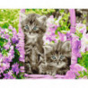 Голубоглазые котята Раскраска картина по номерам на холсте