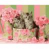 Котята в коробке Раскраска картина по номерам на холсте