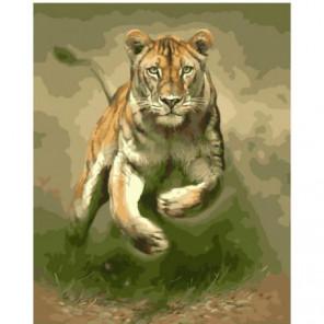 Львица-охотница Раскраска картина по номерам на холсте