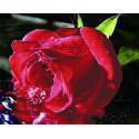 Прохлада для розы Алмазная картина-раскраска по номерам на подрамнике GZS1074