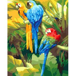 Три попугая Раскраска картина по номерам на холсте CG477