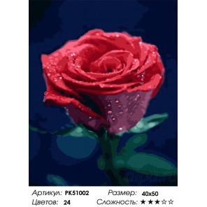 Сложность и количество цветов Красота розы Раскраска картина по номерам на холсте PK51002
