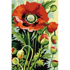 Мак в расцвете Раскраска картина по номерам на холсте