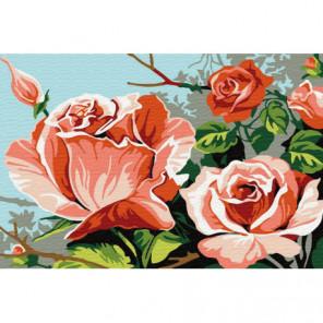 Распустившиеся розы Раскраска картина по номерам на холсте
