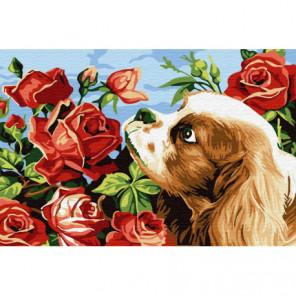 Запах роз Раскраска картина по номерам на холсте