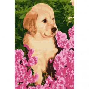 Щенок в цветах Раскраска картина по номерам на холсте