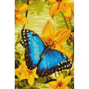 Лазурная бабочка Раскраска картина по номерам на холсте