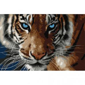 Голубоглазый тигр Раскраска картина по номерам на холсте