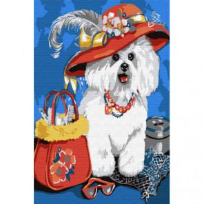 Собачка в шляпке Раскраска картина по номерам на холсте