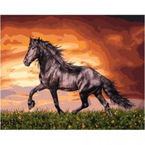 Черный конь Раскраска картина по номерам на холсте