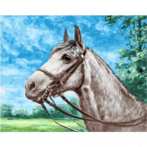 Серая лошадка Раскраска картина по номерам на холсте